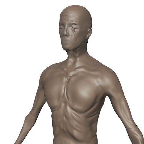 Frontside of Fume within Mudbox, subdivided to Level 2.