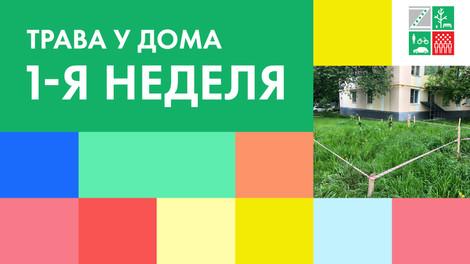 Трава у дома — новый экологический проект