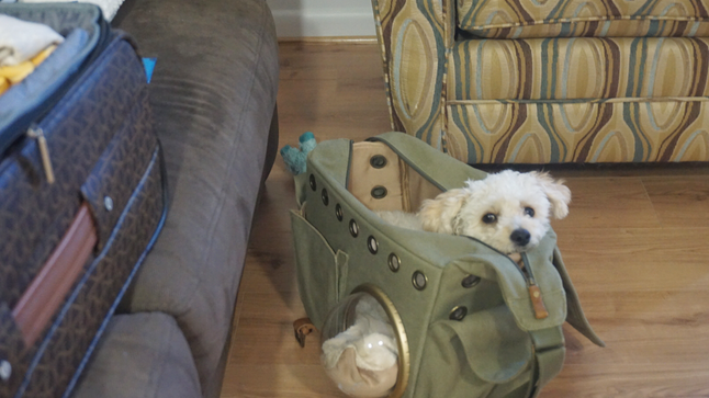 Flying with Pets: Must Haves