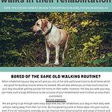 rehab dog walks.jpg