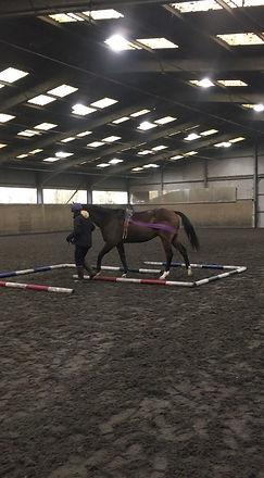 Horse rehabilitation exercises