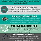 Horse diet tips.jpg