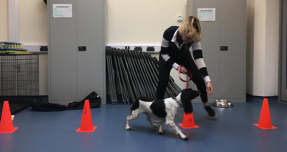 Dog rehabilitation exercises