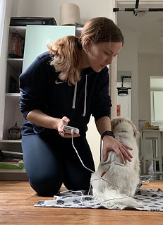 Dog electrotherapy