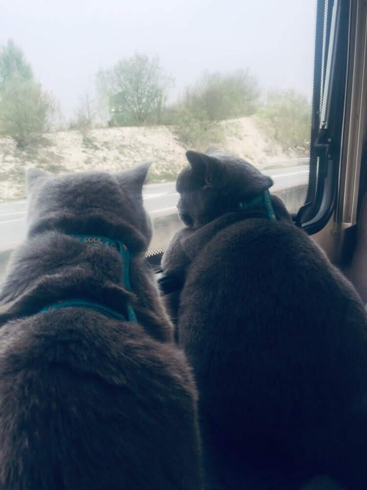 Aloïze en huisgenoot Max op vakantie met de camper