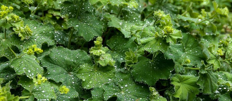 Rain gardens  IAHS