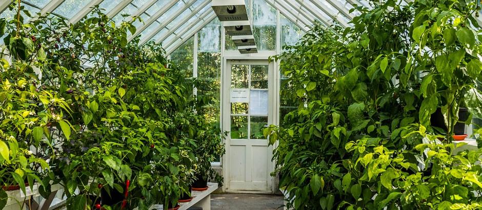 Campus Garden / Green House