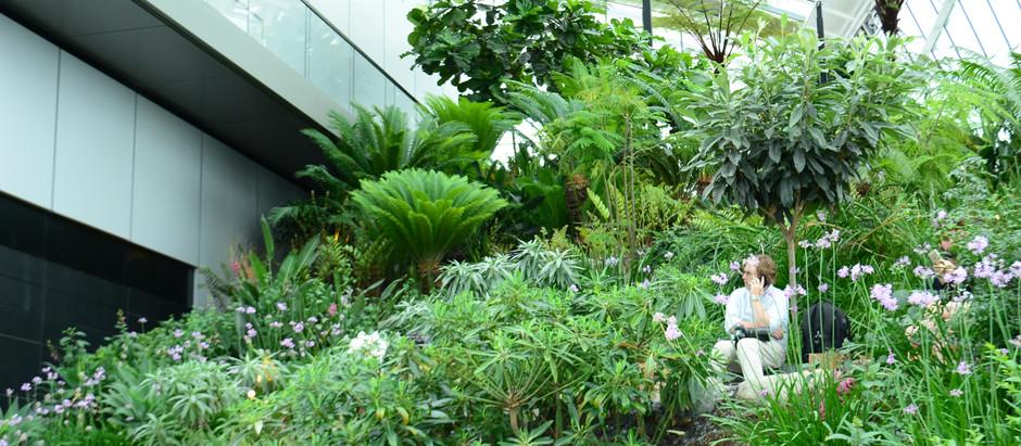Indoor Community Garden