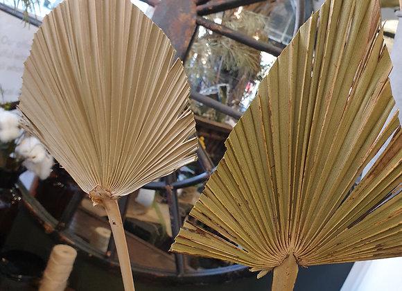Dried Stems