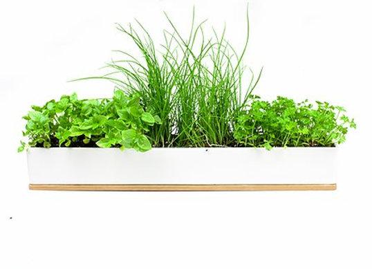 Mico herb Seedling Kit