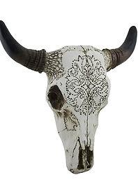 White Bull Skull.jpg