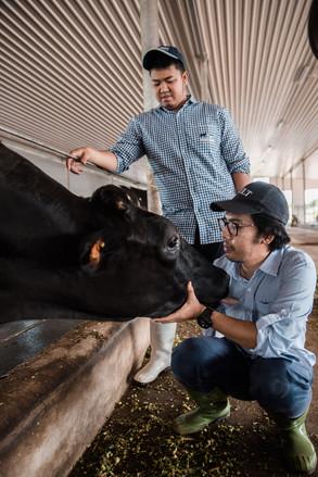 hometowndairy-cows3.jpg