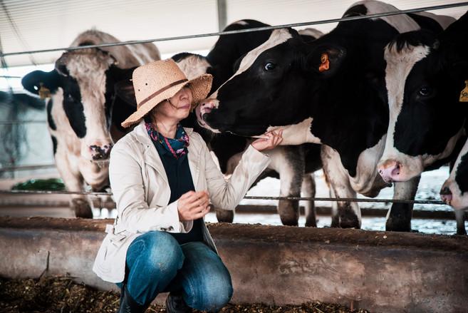 hometowndairy-cows5.jpg