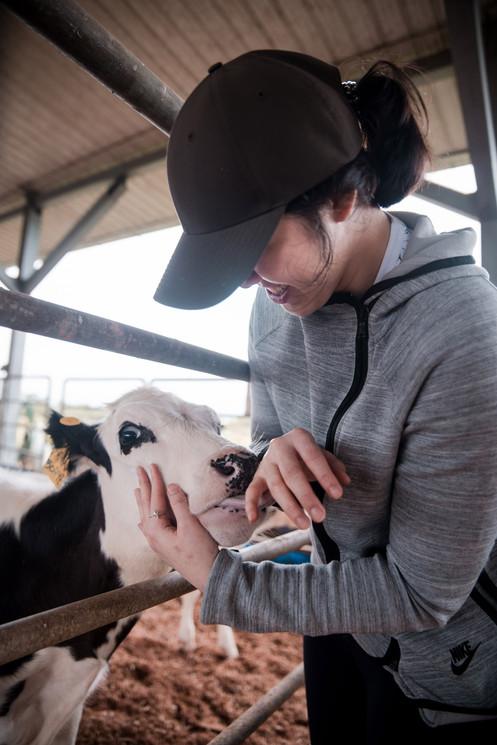 hometowndairy-cows6.jpg