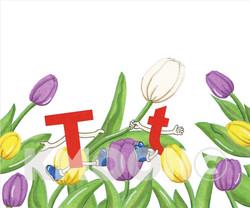 Tt is for tulip