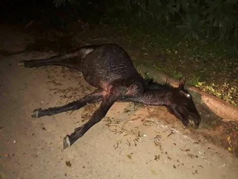 Animais soltos pelas ruas e estradas continuam causando acidentes e prejuízos.