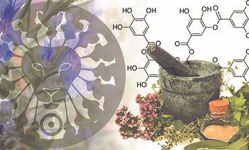 David Bescoby herbal image.jpg