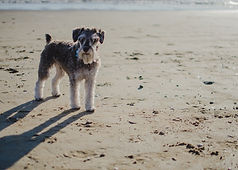 Dog on beach.jpg