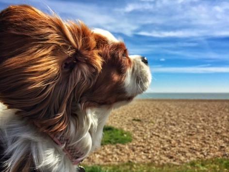 Windswept Dog.jpg