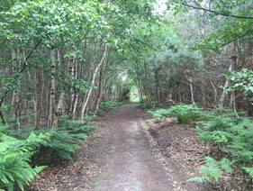 Saxmundham Walks