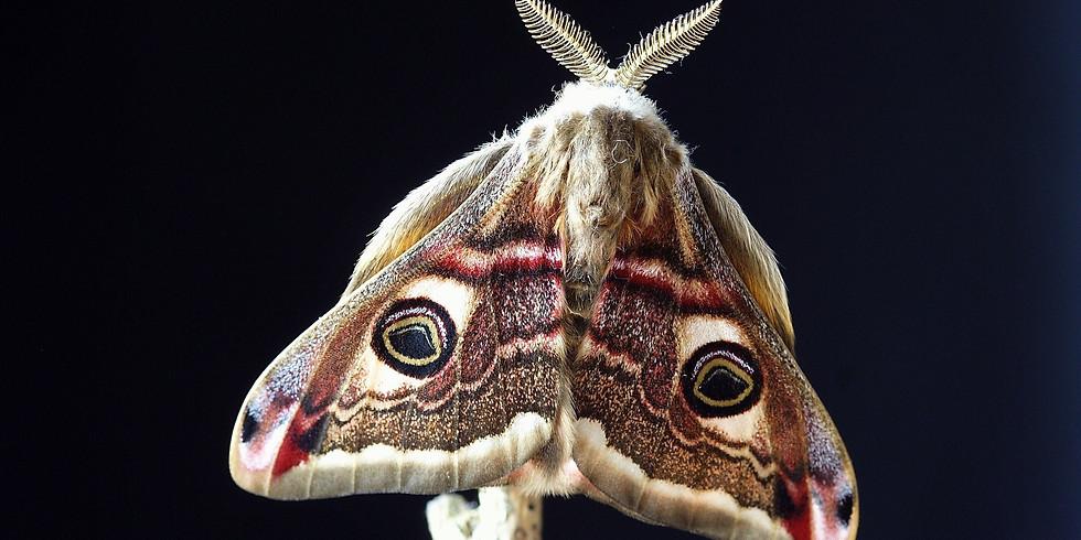 Moth Trap in Fen Meadow, Woodbridge
