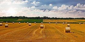 countryside-4674764_1920.jpg