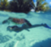 Snorkeling & Diving in the Seychelles