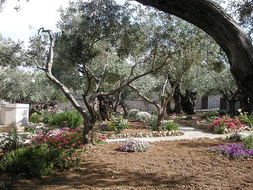 Getsemanessa