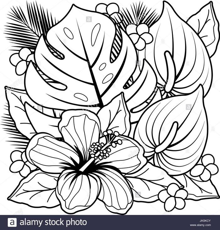 plantes-tropicales et de fleurs-