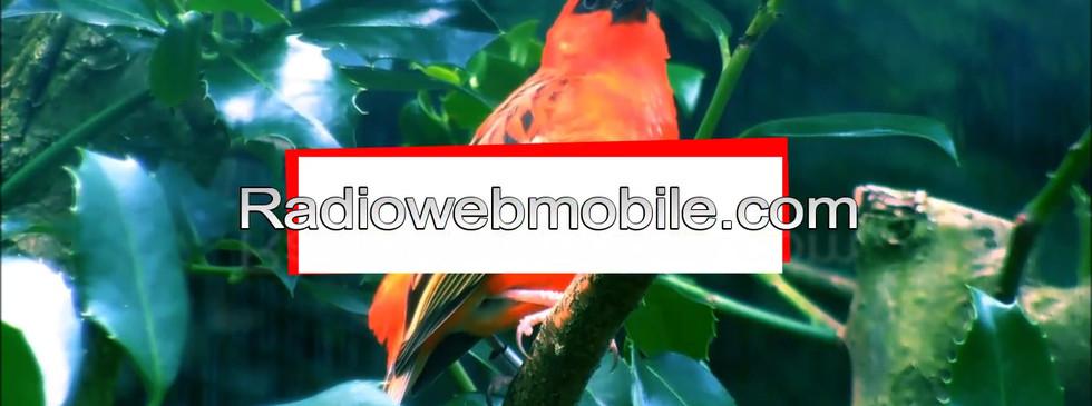 Modèele_et_fugurante_de_la_radioweb_pro