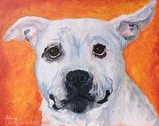 Lex. A portrait of a staffordshire terrier.