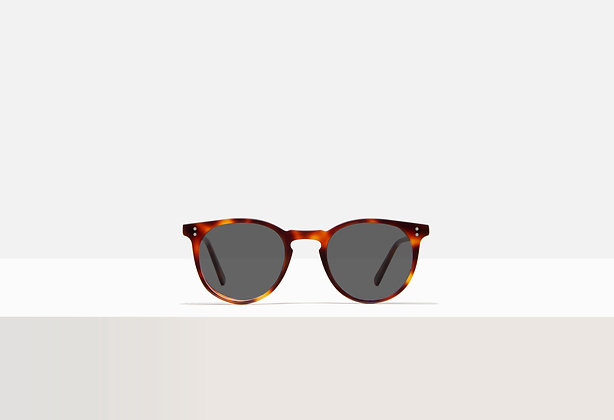 Sunglasses - Franklin in Tuscan Tortoise