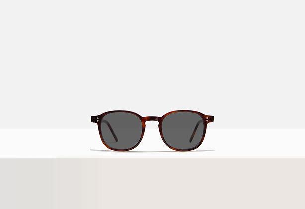 Sunglasses - Whitman in Tuscan Tortoise