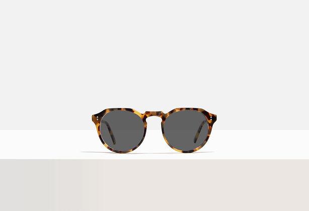 Sunglasses - Faulkner in Honey Amber