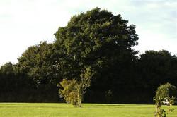 field +tree.jpg