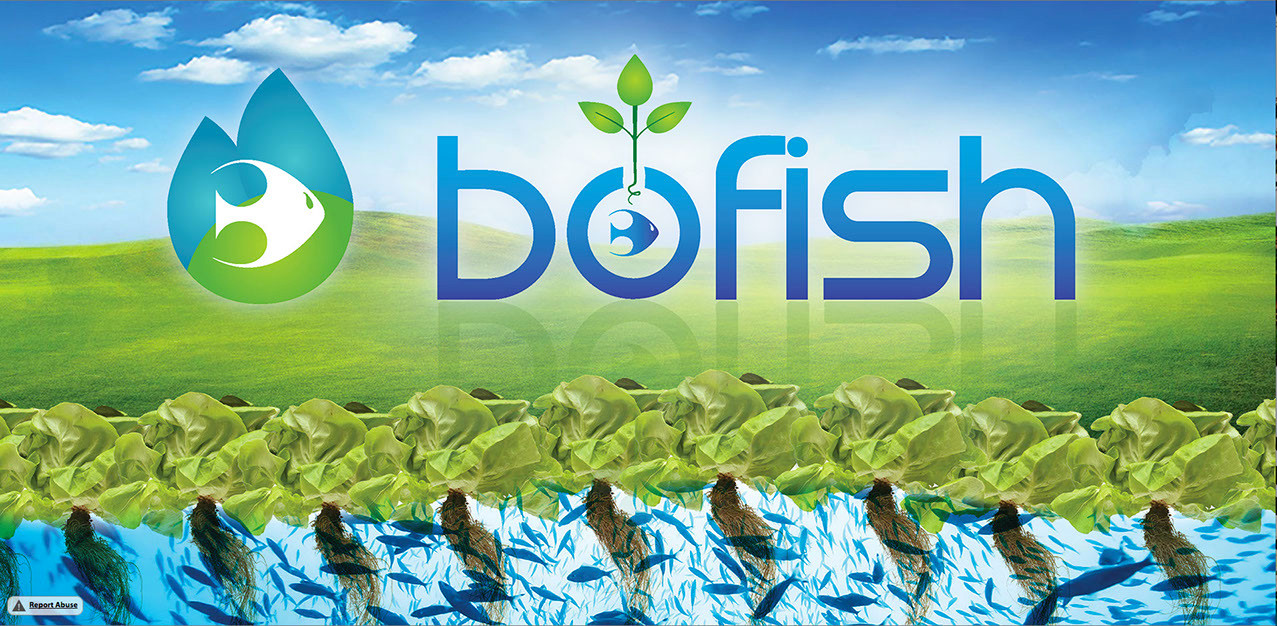 bofish paisaje