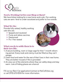 Cat Shelter Flyer
