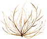 tumbleweed2.png