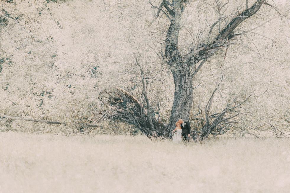 bröllopsfotograf Övik träd