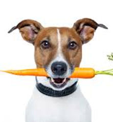 dog eating carrots.jpg