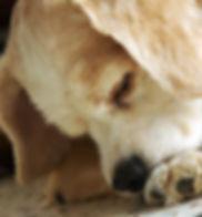 paw licking.jpg