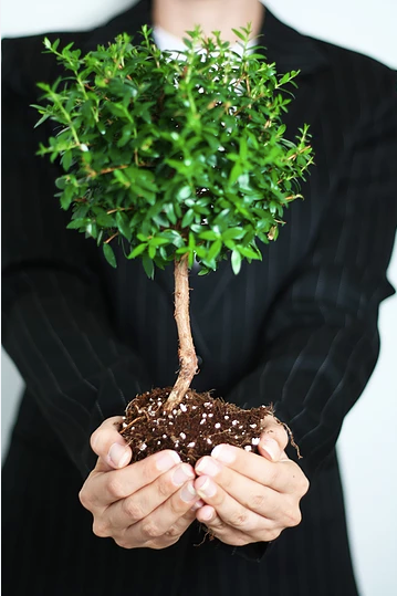 growth-foundation-tree-roots-onepercent-property