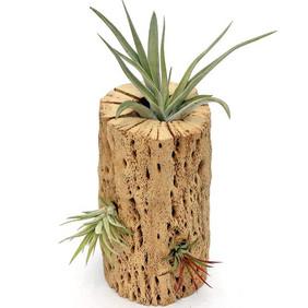 Plant Scapes