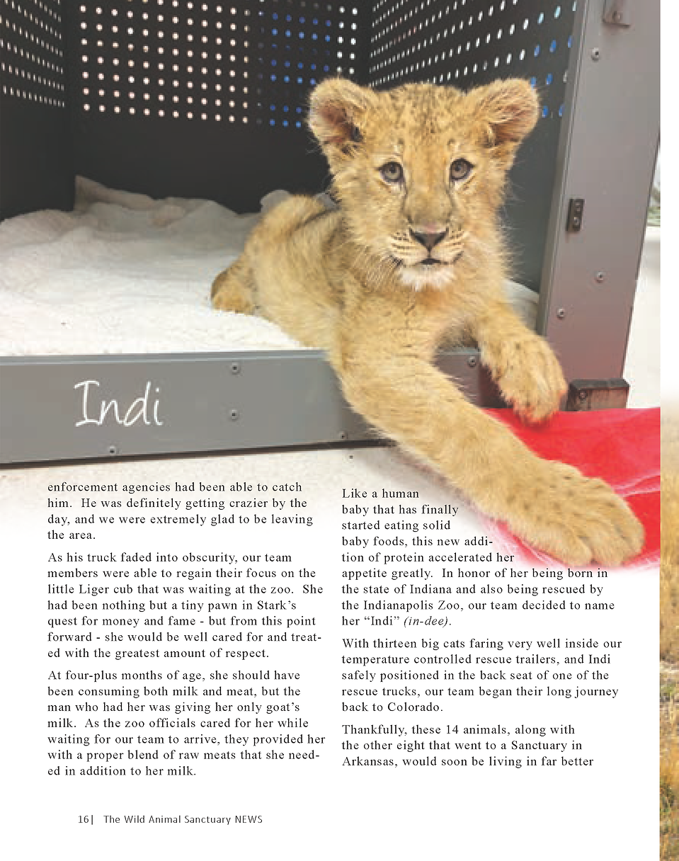 Wildlife In Need Rescue_Page_10.png