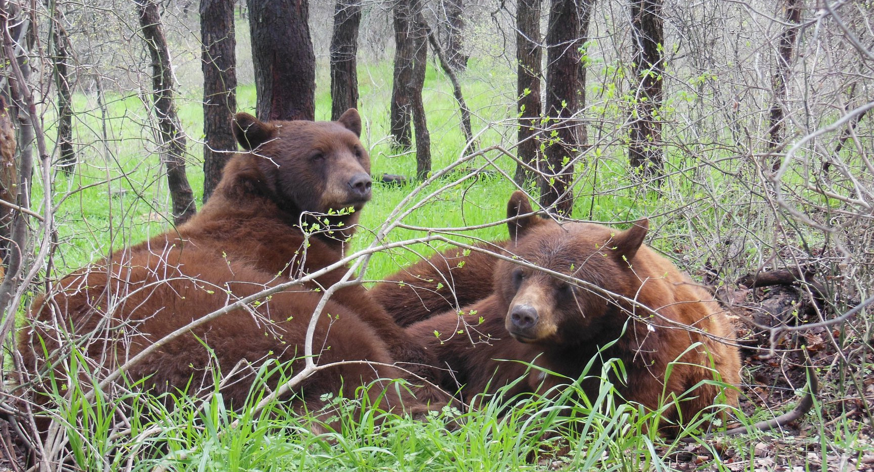 Rescued Bears