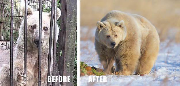 Bears Rescued From Jail Cells