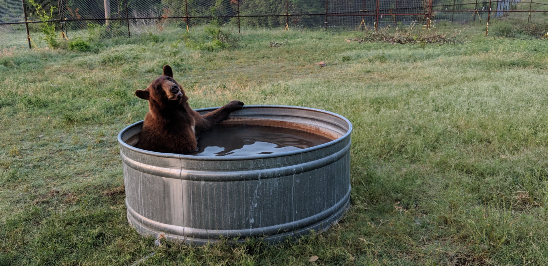 Rescued Bears