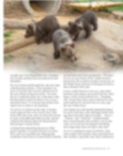 Bear cubs story_Page_2.png