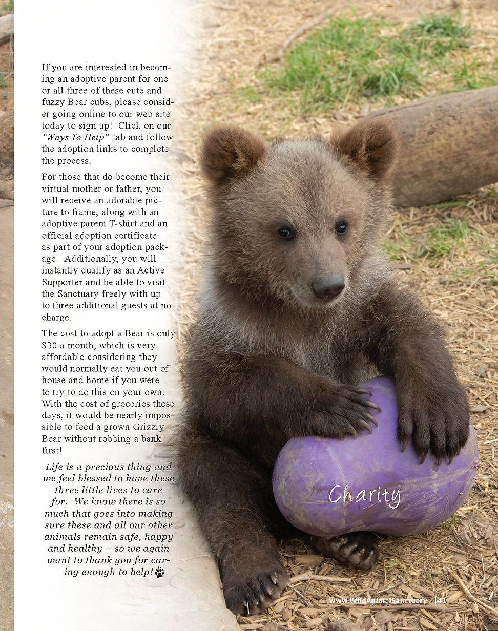 Bear cubs story_Page_6.png