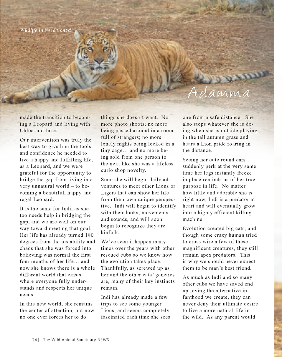 Wildlife In Need Rescue_Page_18.png